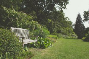 Wooden bench surrounded by garden plants and lawn